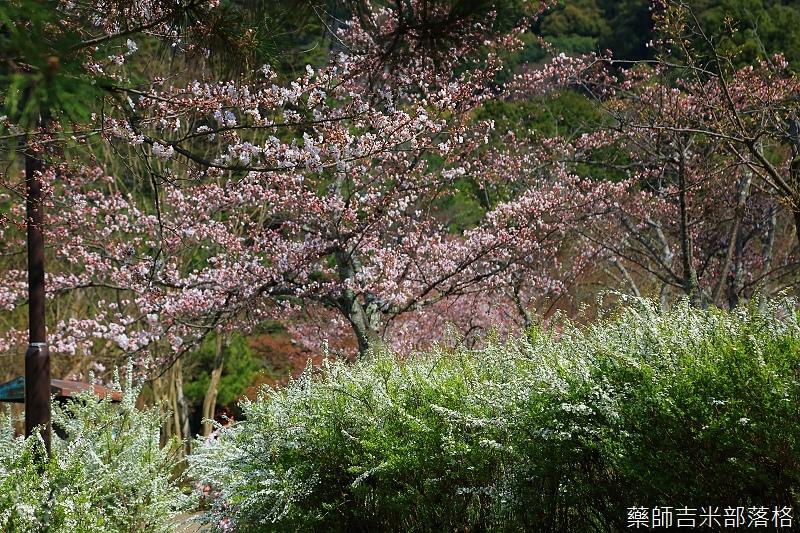 Kyoto_150330_0682.jpg