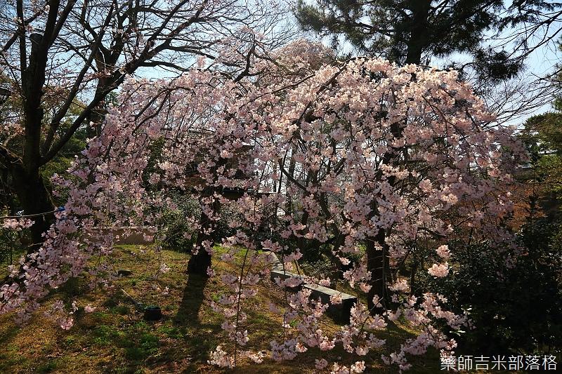 Kyoto_150330_0684.jpg