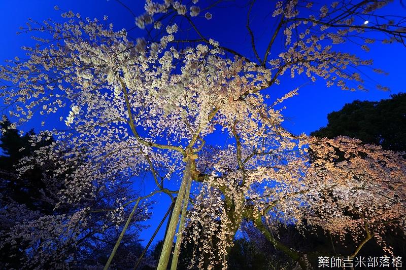 Kyoto_150330_1223.jpg