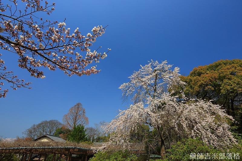 Kyoto_150330_0249.jpg