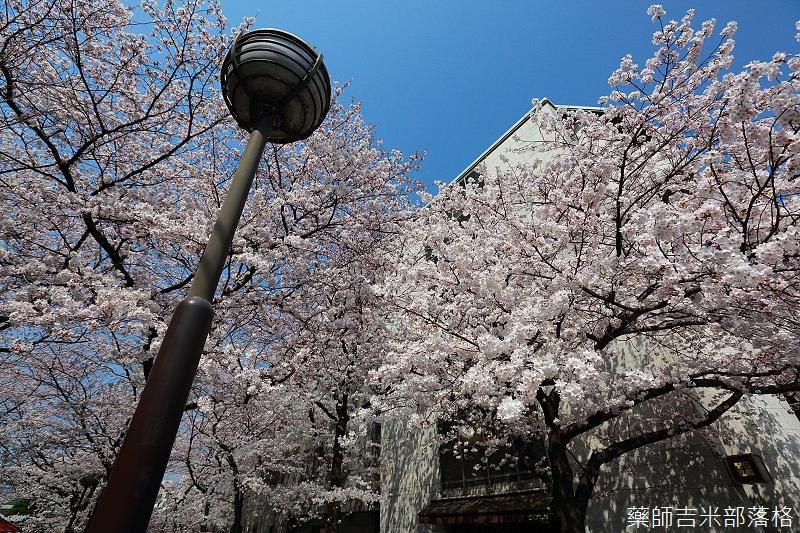 Kyoto_150331_0037.jpg