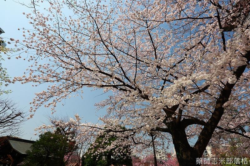 Kyoto_150331_0096.jpg