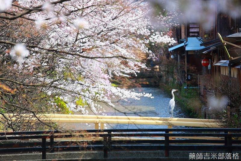 Kyoto_150331_0287.jpg