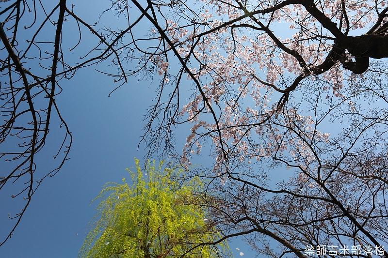 Kyoto_150331_0344.jpg