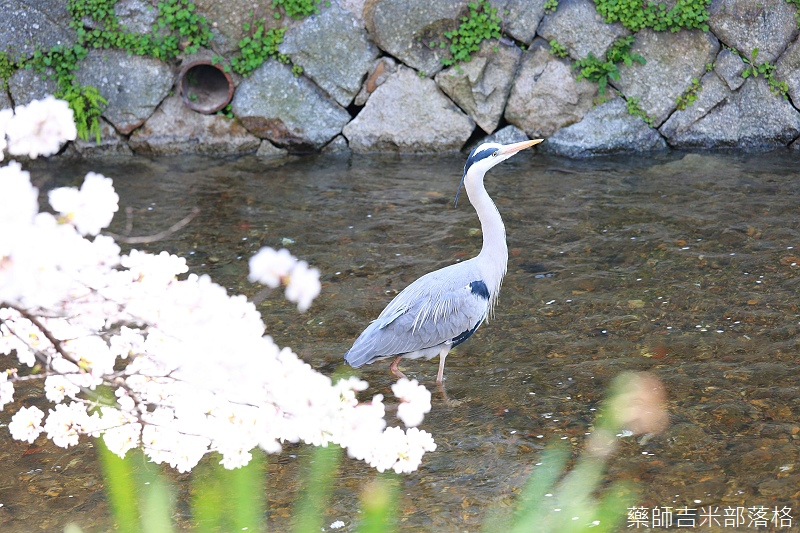 Kyoto_150331_0400.jpg