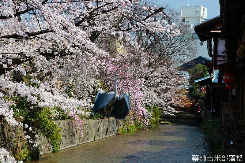Kyoto_150331_0426.jpg