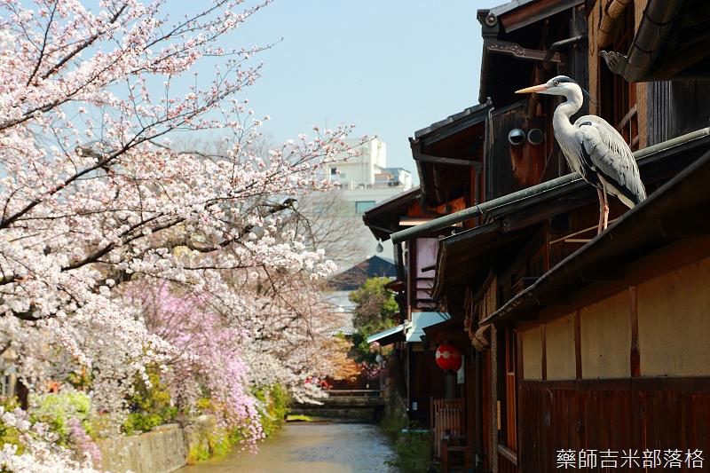 Kyoto_150331_0432.jpg