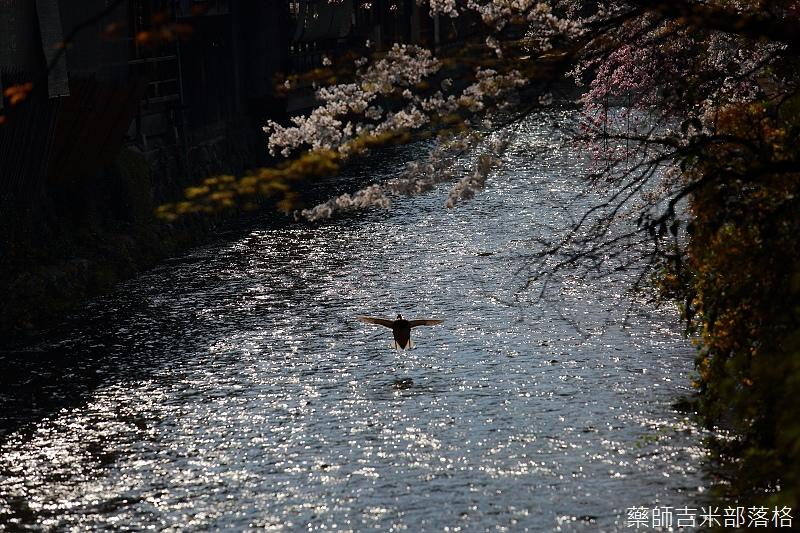 Kyoto_150331_0591.jpg