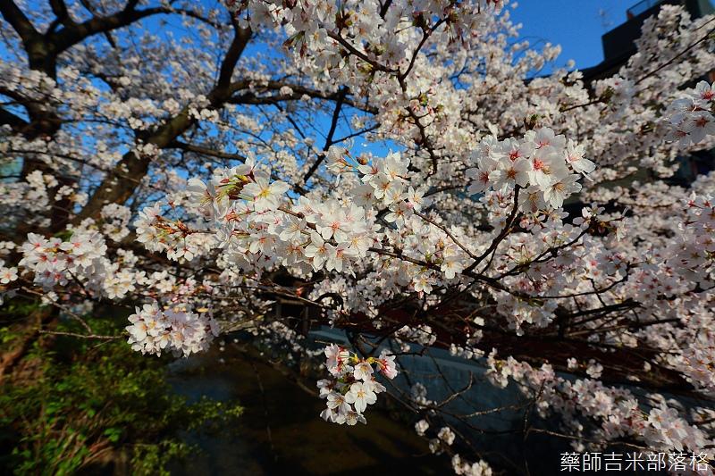 Kyoto_150331_0894.jpg