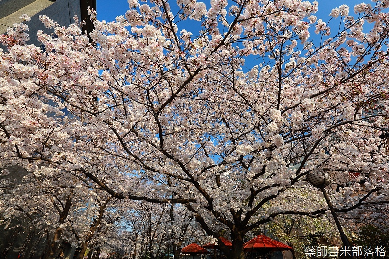 Kyoto_150331_0957.jpg
