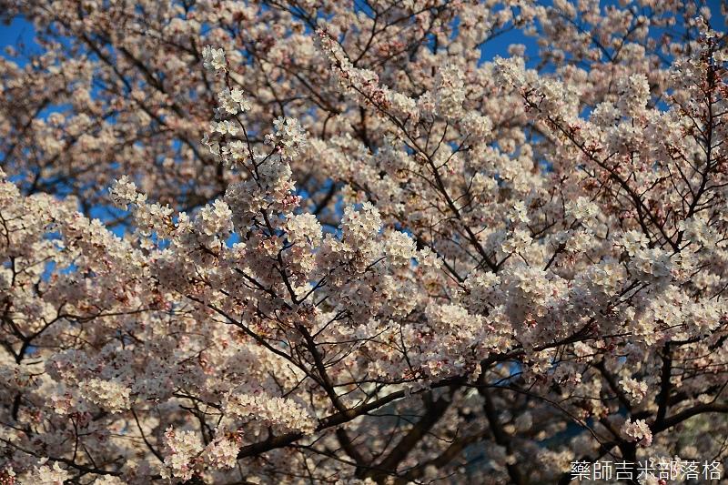 Kyoto_150331_1035.jpg