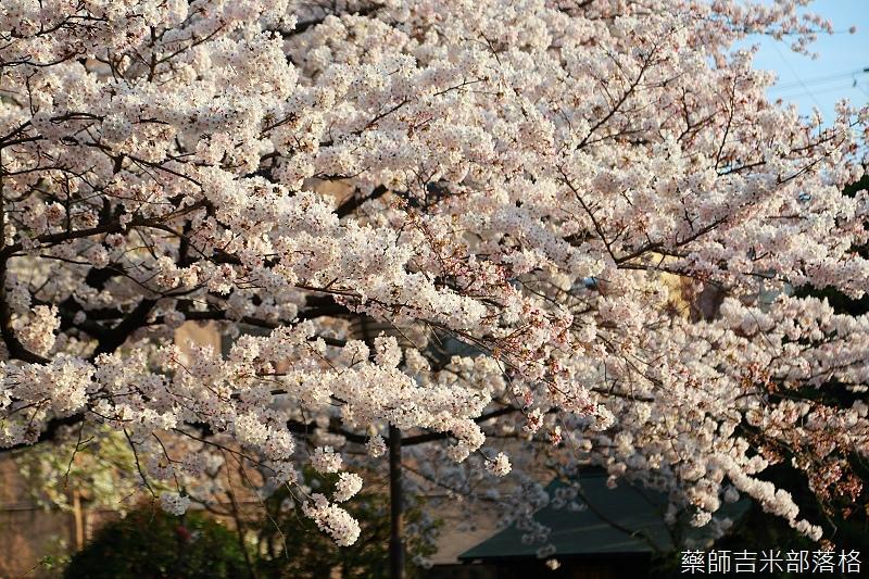 Kyoto_150331_1046.jpg