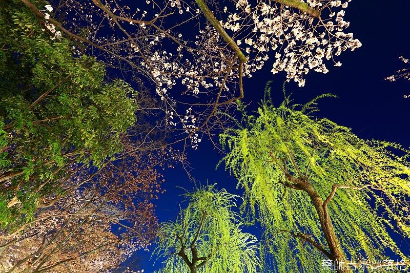 Kyoto_150331_1365.jpg