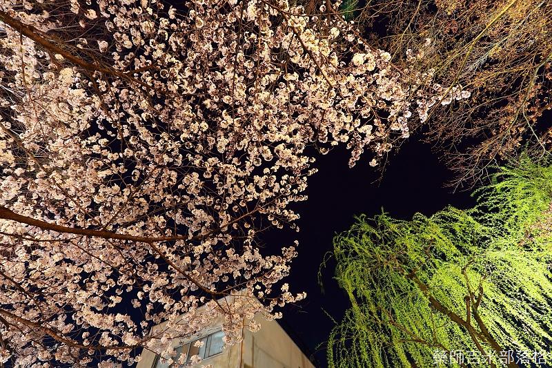 Kyoto_150331_1395.jpg