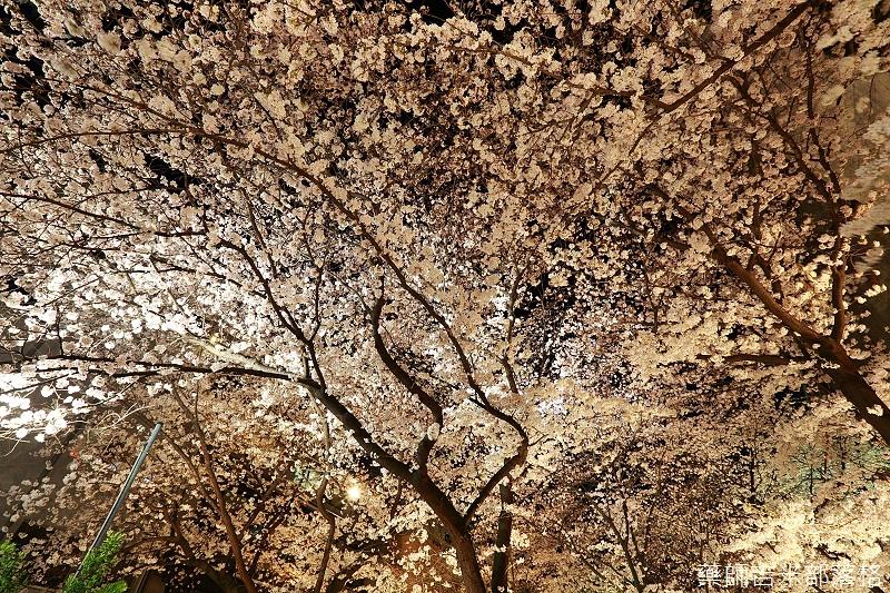 Kyoto_150331_1409.jpg