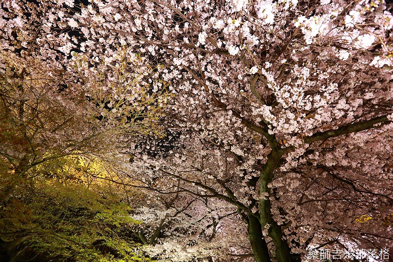 Kyoto_150402_1863.jpg