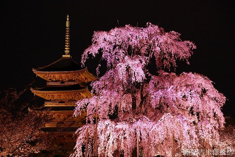 Kyoto_150402_1981.jpg