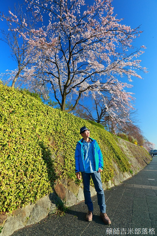Kyoto_Sakura_029.jpg