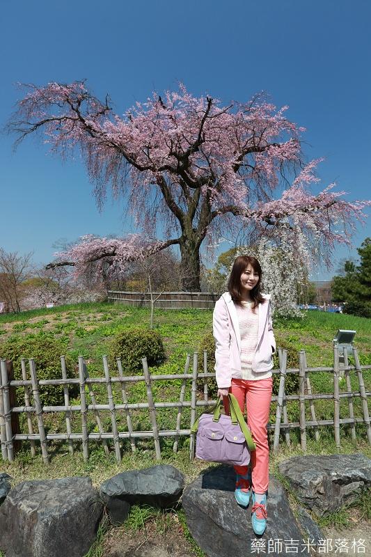 Kyoto_Sakura_115.jpg