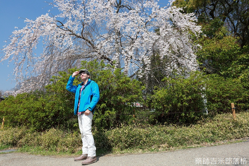 Kyoto_Sakura_119.jpg