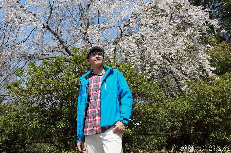 Kyoto_Sakura_130.jpg