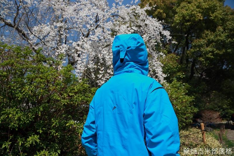 Kyoto_Sakura_170.jpg