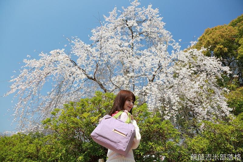 Kyoto_Sakura_234.jpg