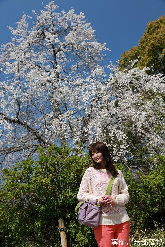 Kyoto_Sakura_242.jpg