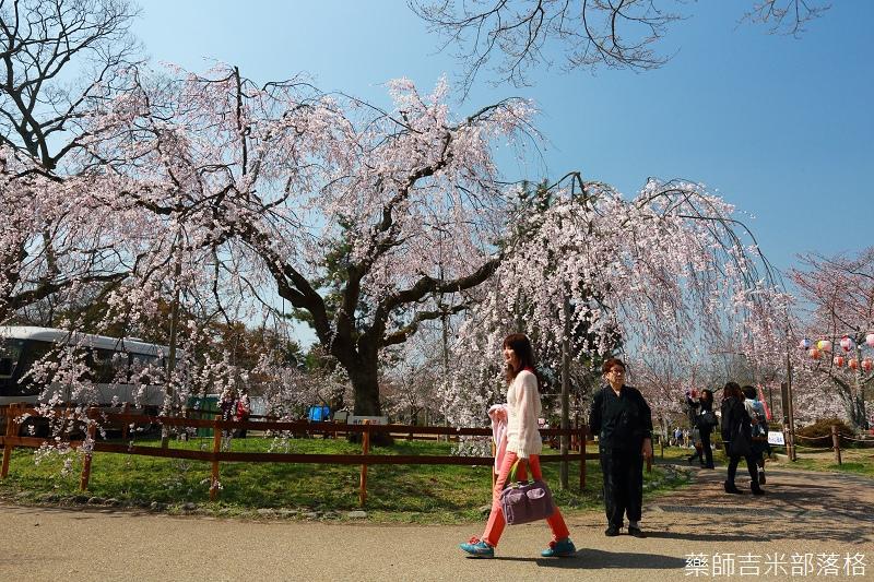 Kyoto_Sakura_314.jpg