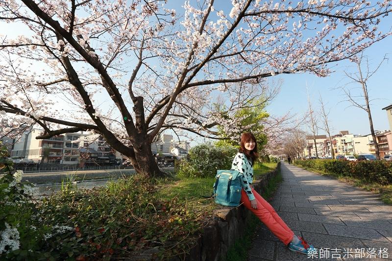 Kyoto_Sakura_351.jpg