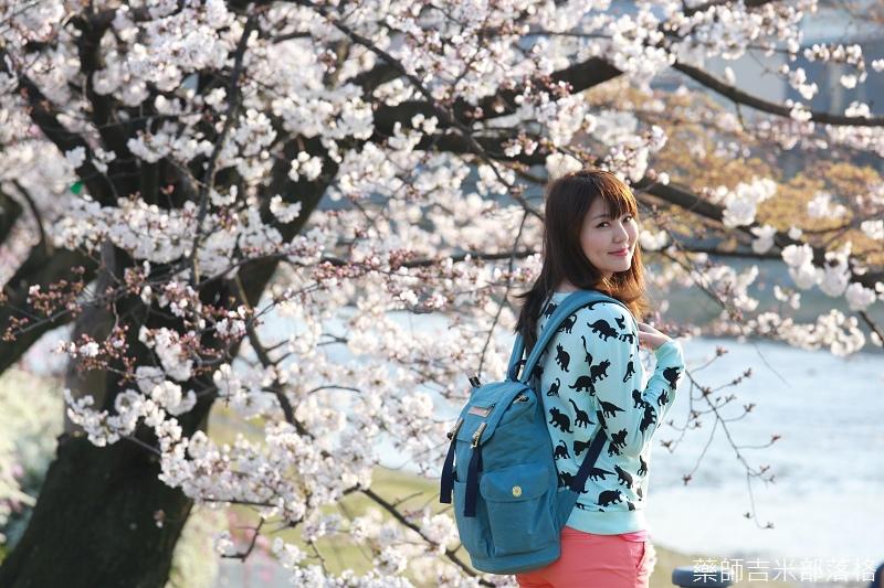 Kyoto_Sakura_356.jpg