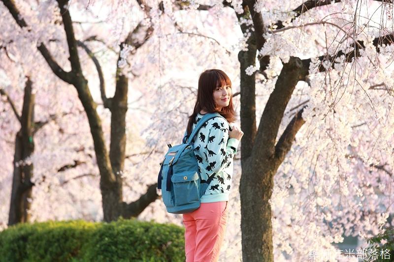 Kyoto_Sakura_396.jpg