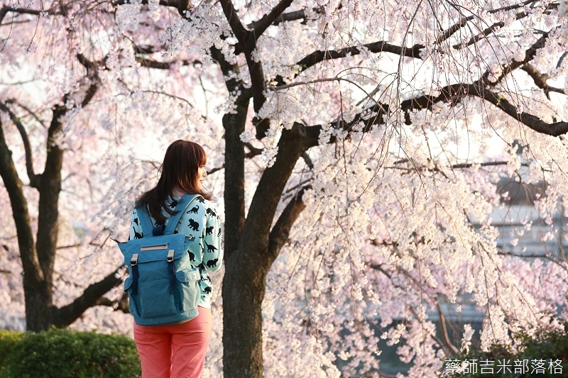 Kyoto_Sakura_409.jpg