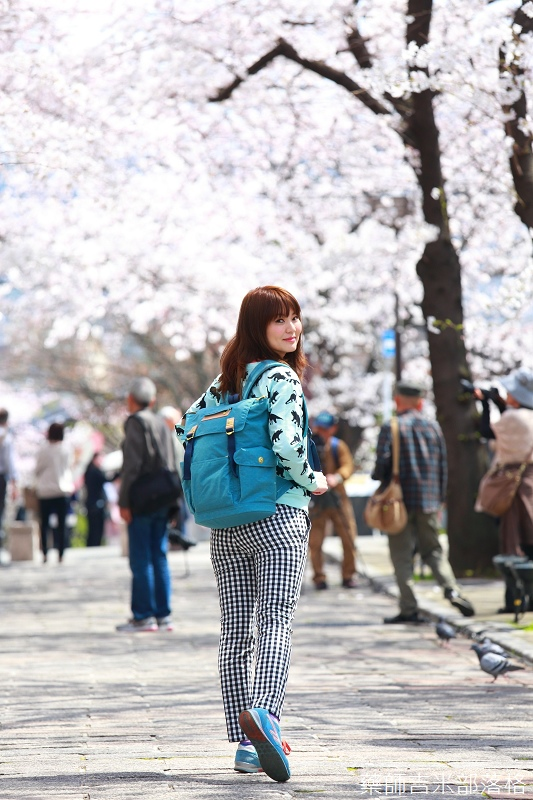 Kyoto_Sakura_442.jpg