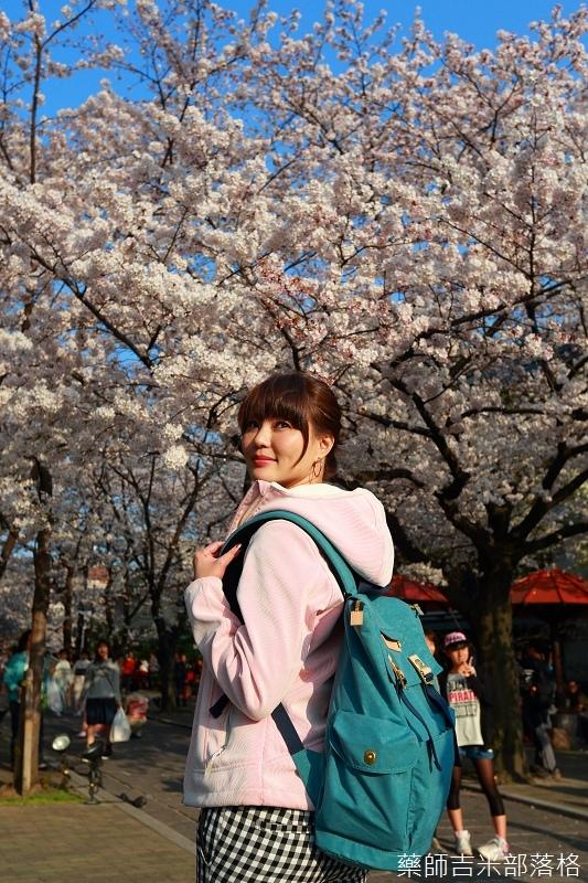 Kyoto_Sakura_444.jpg