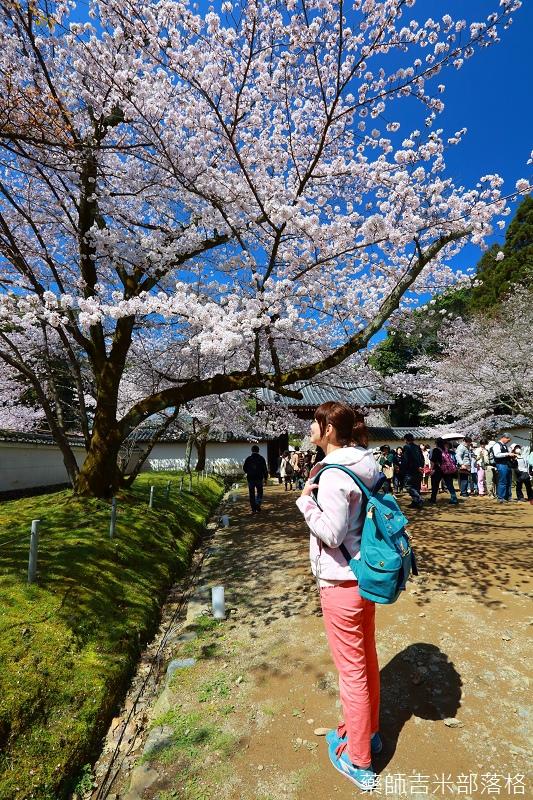 Kyoto_Sakura_482.jpg