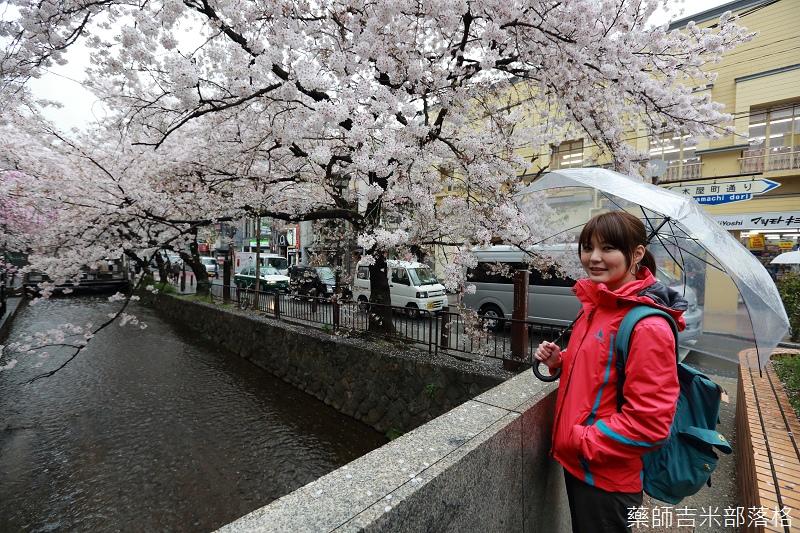 Kyoto_Sakura_522.jpg