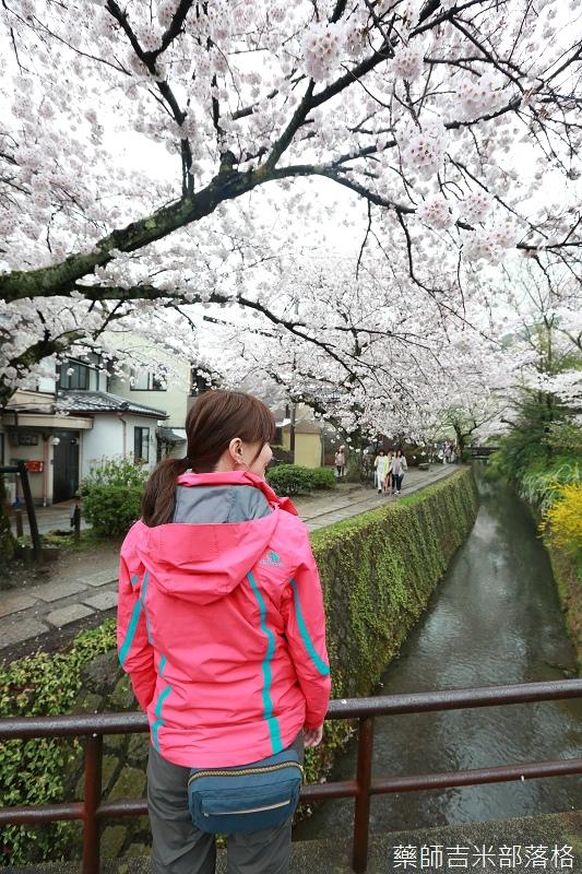 Kyoto_Sakura_552.jpg