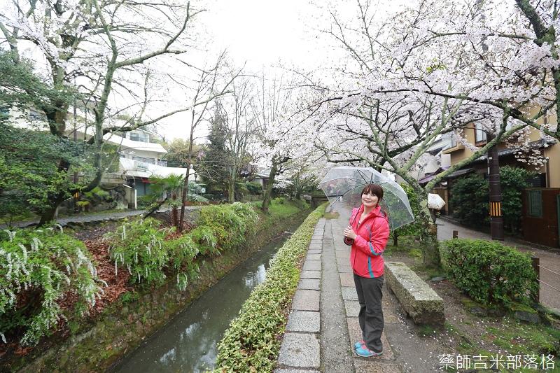 Kyoto_Sakura_559.jpg