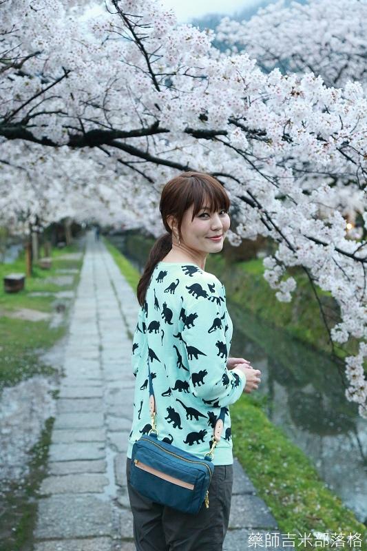 Kyoto_Sakura_621.jpg
