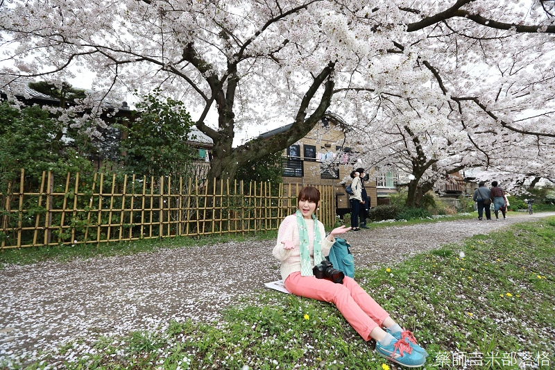Kyoto_Sakura_697.jpg