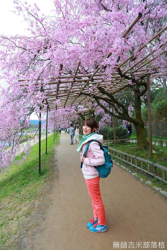 Kyoto_Sakura_703.jpg