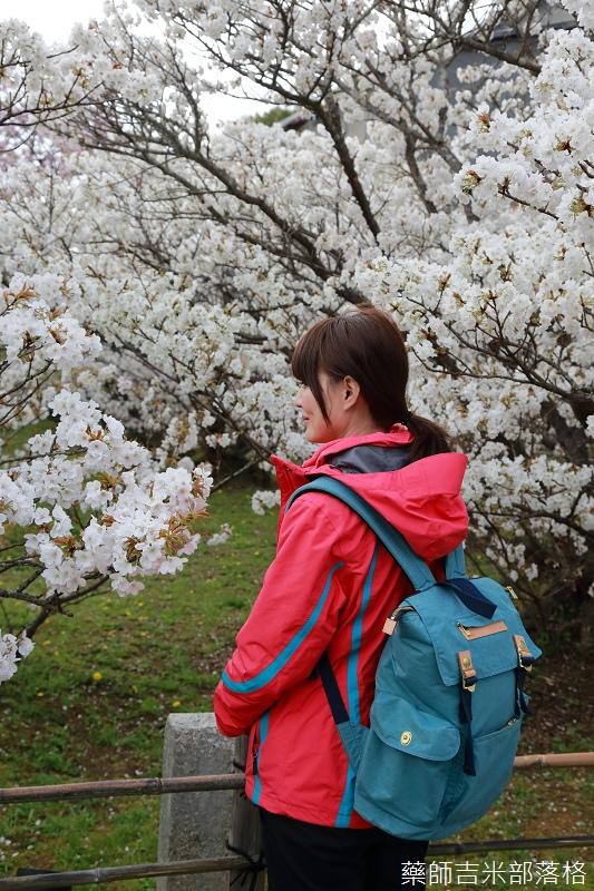 Kyoto_Sakura_794.jpg