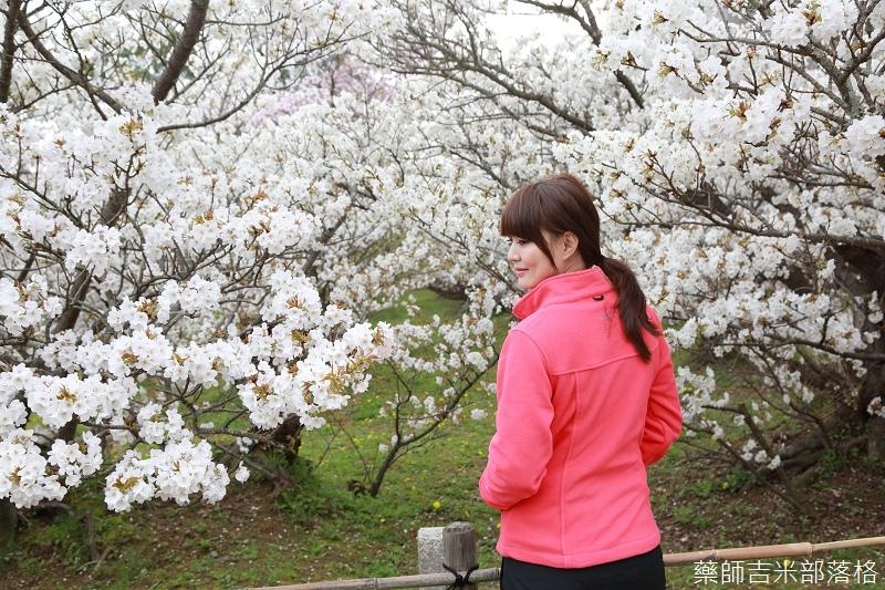 Kyoto_Sakura_831.jpg