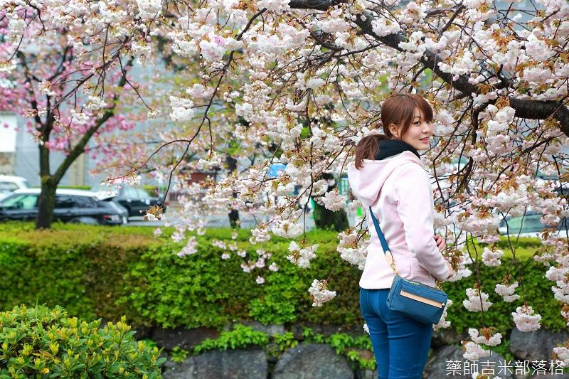 Kyoto_Sakura_962.jpg