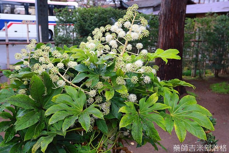 Aizu_151129_364.jpg
