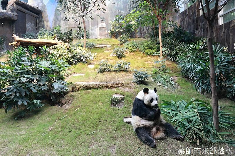 HK_Ocean_Park_0485.jpg