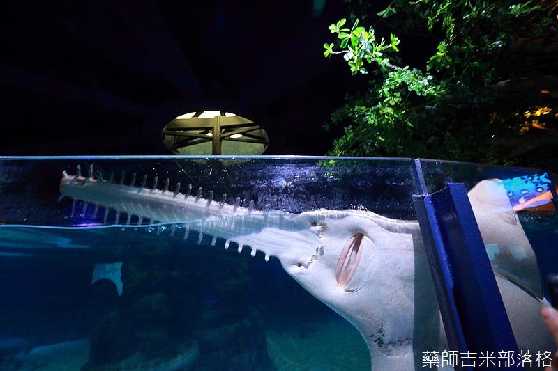 HK_Ocean_Park_1282.jpg