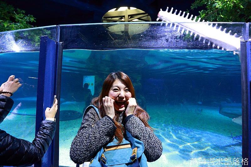 HK_Ocean_Park_1295.jpg