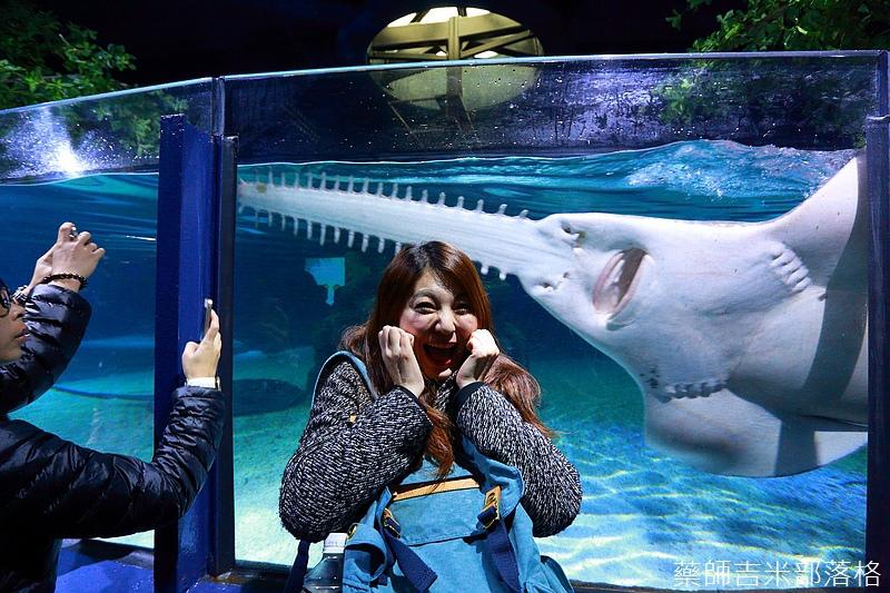HK_Ocean_Park_1298.jpg